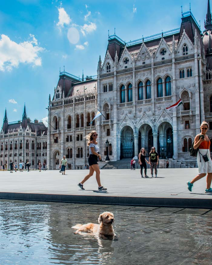 Dog is bathing in a fountain in front of the Hungarian Parliament