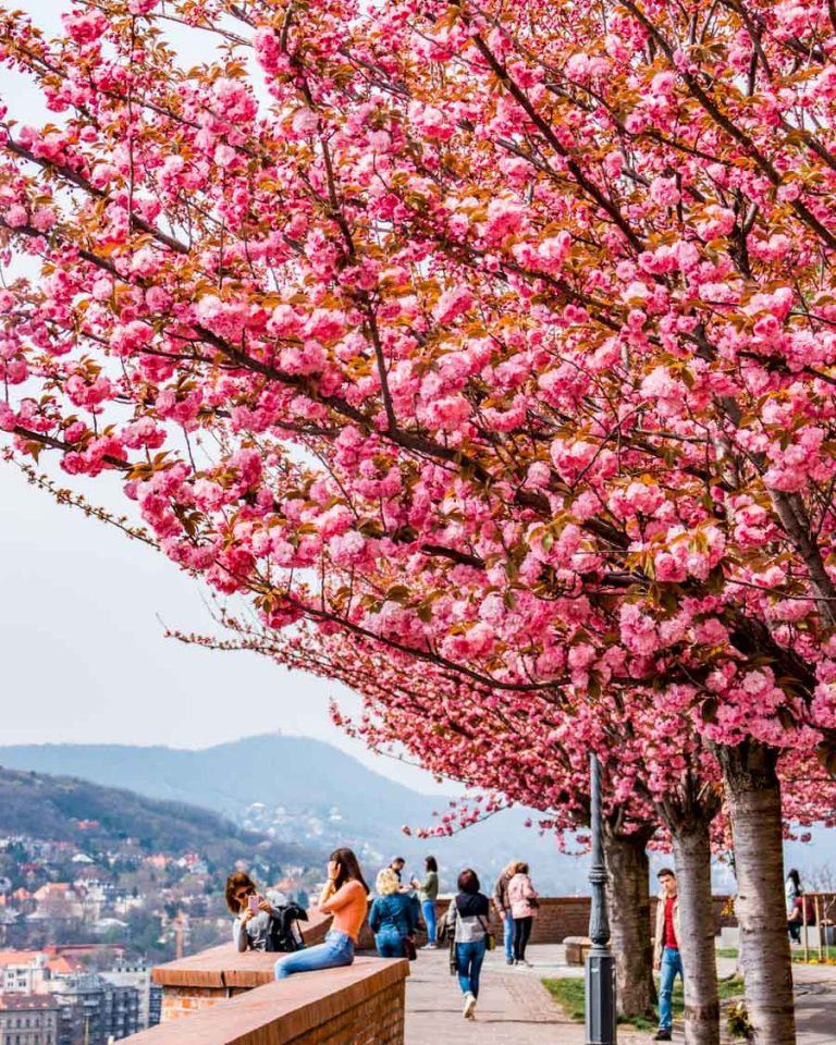 Spring day in the Castle District