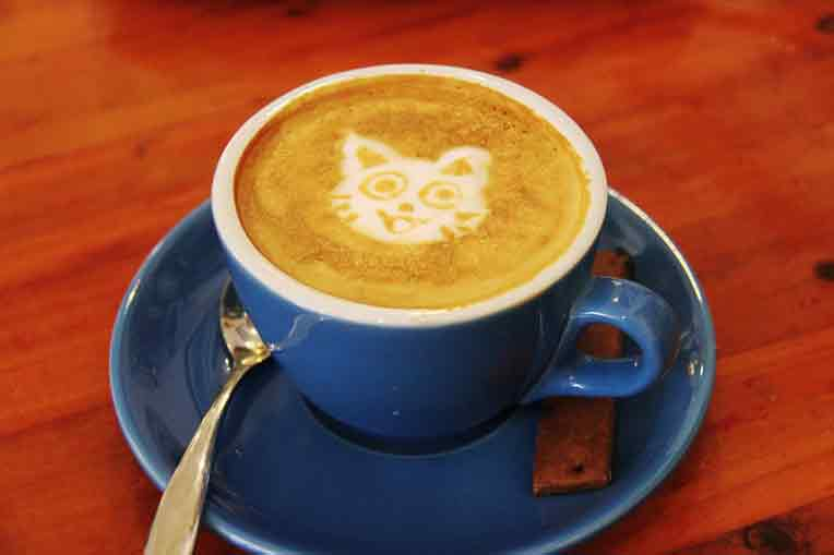 cat image in a coffee